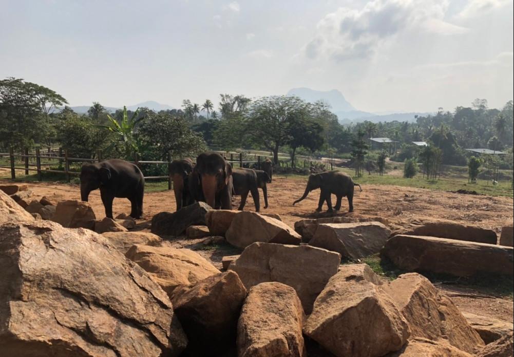 在斯里兰卡第三天了,一直想来,还觉得不真实